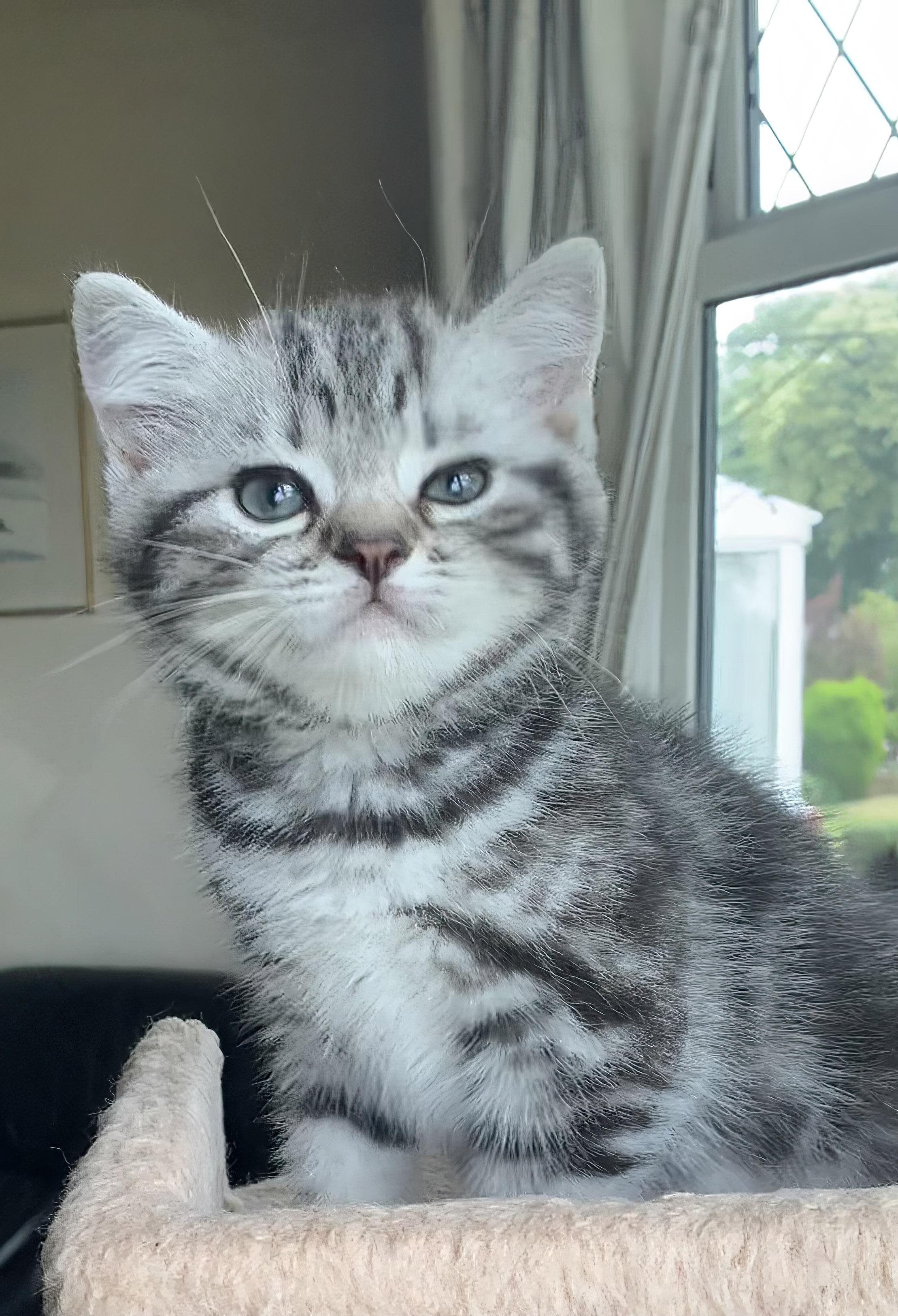 Kitten July 2021